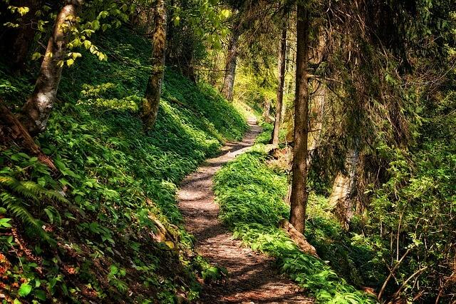 A path through the wood